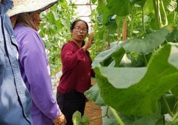 ครูรางวัลสมเด็จเจ้าฟ้าฯประจำติมอร์-เลสเต ๒๕๖๐ เรียนรู้ดูงานโครงการหลวงและโครงการพัฒนาพื้นที่สูงในไทยเพื่อไปพัฒนาพื้นที่มอร์-เลสเต